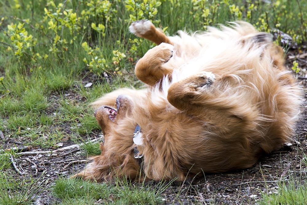 blaf-en-go-apeldoorn-blafengo-hondenuitlaatservice-algemene-voorwaarden