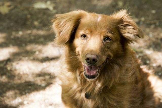 blaf-en-go-blafengo-hondenuitlaatservice-apeldoorn-DSC_0225