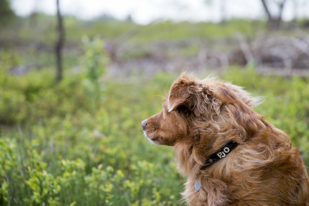 blaf-en-go-apeldoorn-blafengo-hondenuitlaatservice-inschrijfformulier
