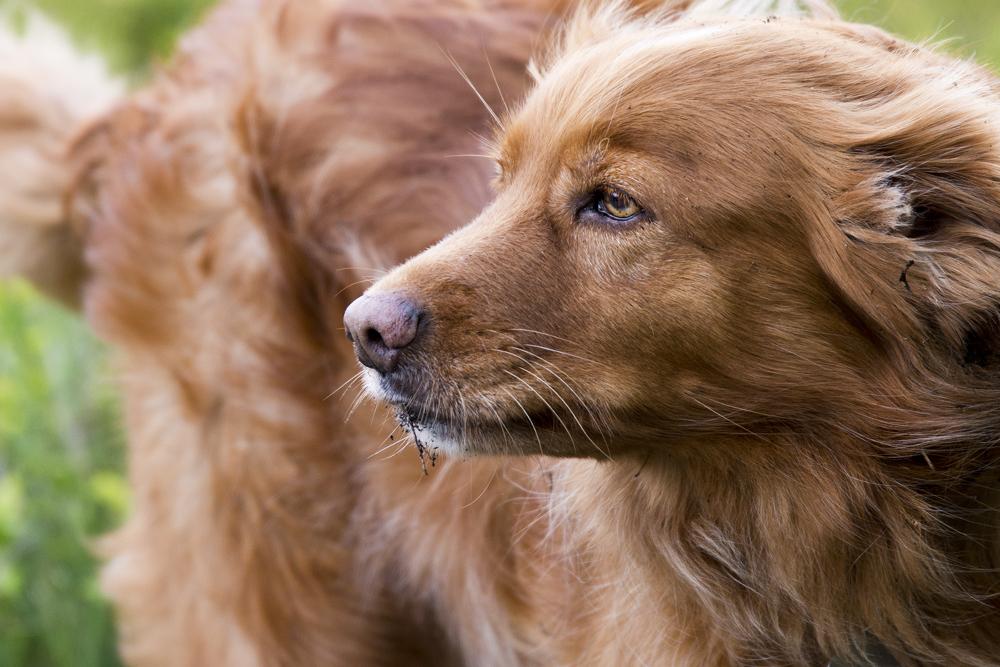 blafengo-blaf-en-go-apeldoorn-hondenuitlaatservice-sleutelcontract