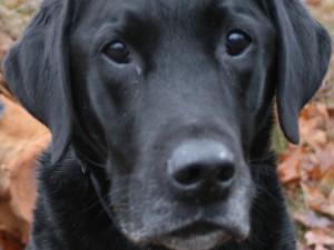 uitlaatservice-blafengo-hond-leesten-bos-blaf