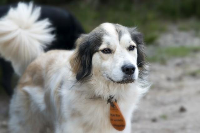 blaf-en-go-blafengo-hondenuitlaatservice-apeldoorn-DSC_0234