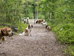 blaf-en-go-blafengo-hondenuitlaatservice-apeldoorn
