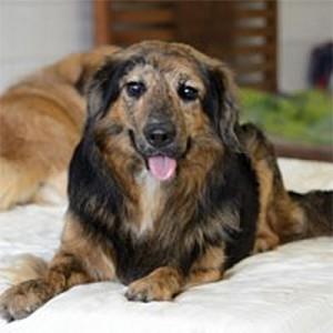 oeff-blafengo-blaf-en-go-apeldoorn-honden-uitlaatservice