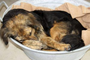 oeff dierenthuis almere blaf en go hondenuitlaatservice apeldoorn